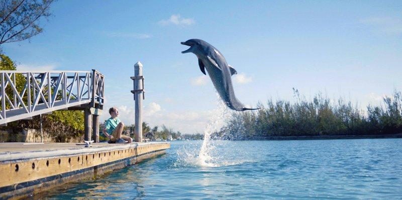 Dolphin Kick Still #2
