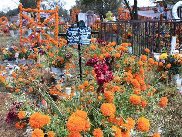 Day of the Dead: A Celebration of Life Still #5